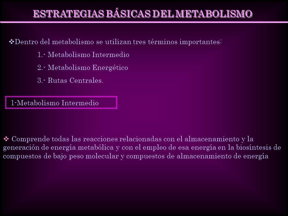 ESTRATEGIAS BÁSICAS DEL METABOLISMO Dentro del metabolismo se utilizan tres términos importantes: 1.- Metabolismo Intermedio 2.- Metabolismo Energétic