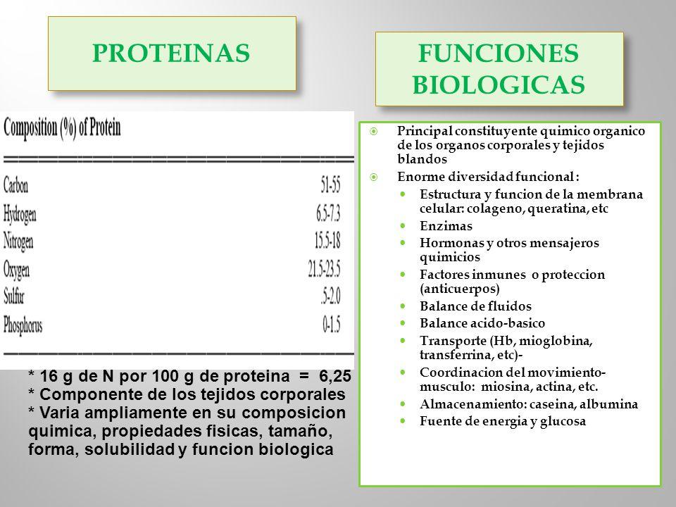 PROTEINAS FUNCIONES BIOLOGICAS Principal constituyente quimico organico de los organos corporales y tejidos blandos Enorme diversidad funcional : Estr