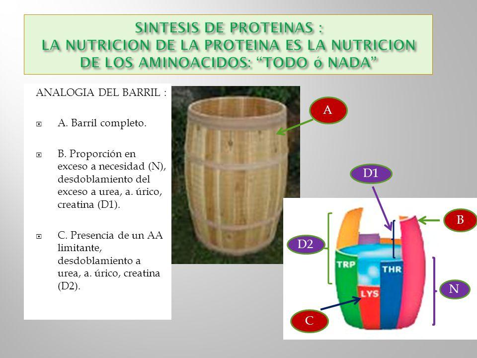 ANALOGIA DEL BARRIL : A. Barril completo. B. Proporción en exceso a necesidad (N), desdoblamiento del exceso a urea, a. úrico, creatina (D1). C. Prese