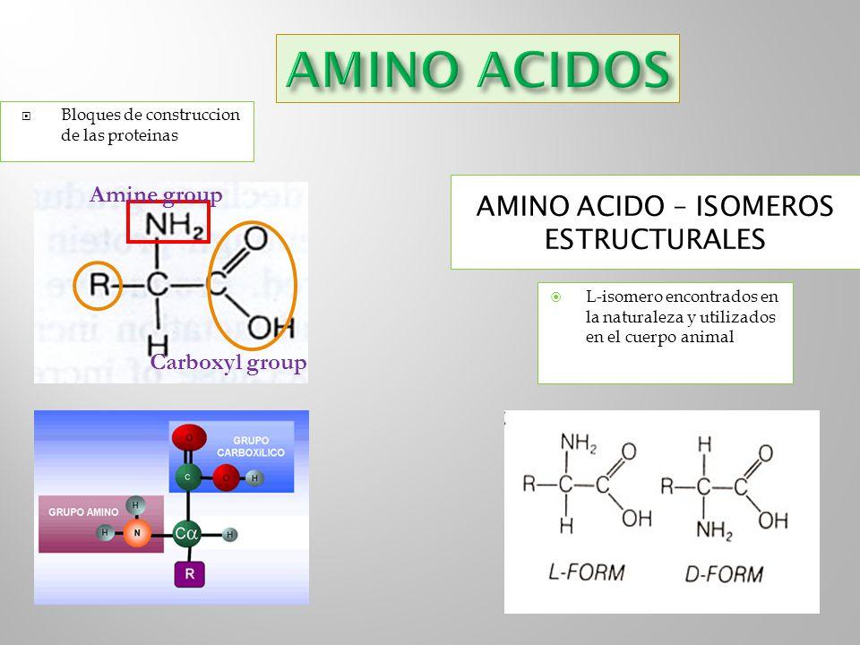Bloques de construccion de las proteinas Amine group Carboxyl group L-isomero encontrados en la naturaleza y utilizados en el cuerpo animal AMINO ACID