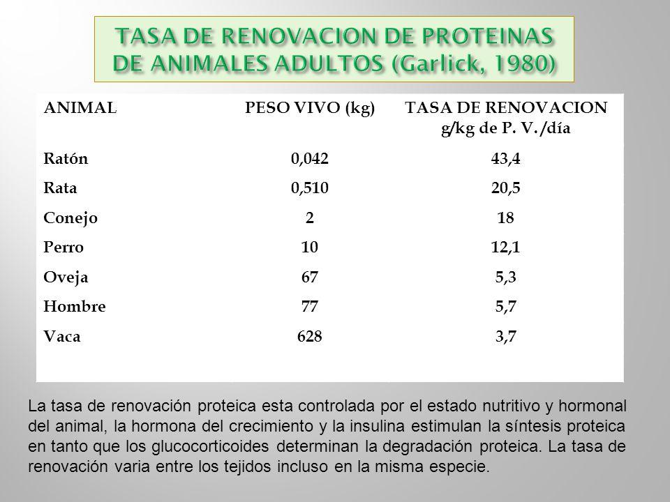 ANIMALPESO VIVO (kg)TASA DE RENOVACION g/kg de P. V. /día Ratón0,04243,4 Rata0,51020,5 Conejo218 Perro1012,1 Oveja675,3 Hombre775,7 Vaca6283,7 La tasa