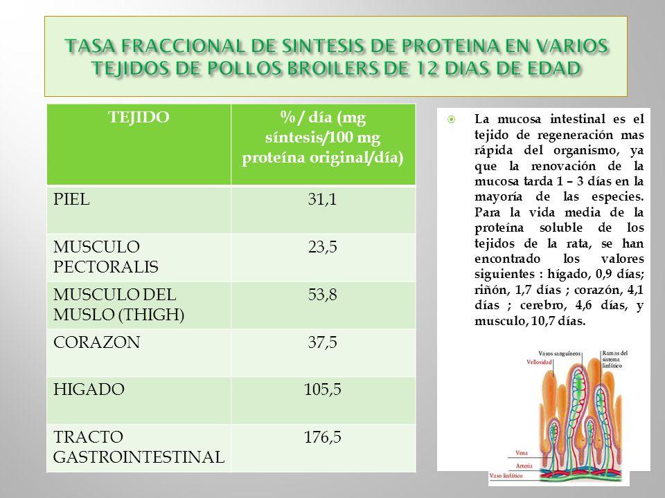 TEJIDO% / día (mg síntesis/100 mg proteína original/día) PIEL31,1 MUSCULO PECTORALIS 23,5 MUSCULO DEL MUSLO (THIGH) 53,8 CORAZON37,5 HIGADO105,5 TRACT