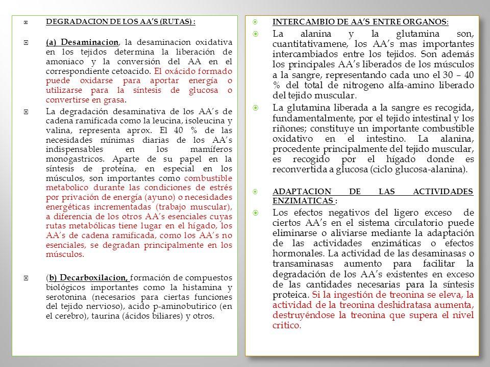 DEGRADACION DE LOS AAS (RUTAS) : (a) Desaminacion, la desaminacion oxidativa en los tejidos determina la liberación de amoniaco y la conversión del AA