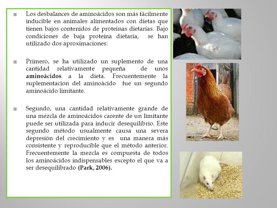 Los desbalances de aminoácidos son más fácilmente inducible en animales alimentados con dietas que tienen bajos contenidos de proteínas dietarías. Baj
