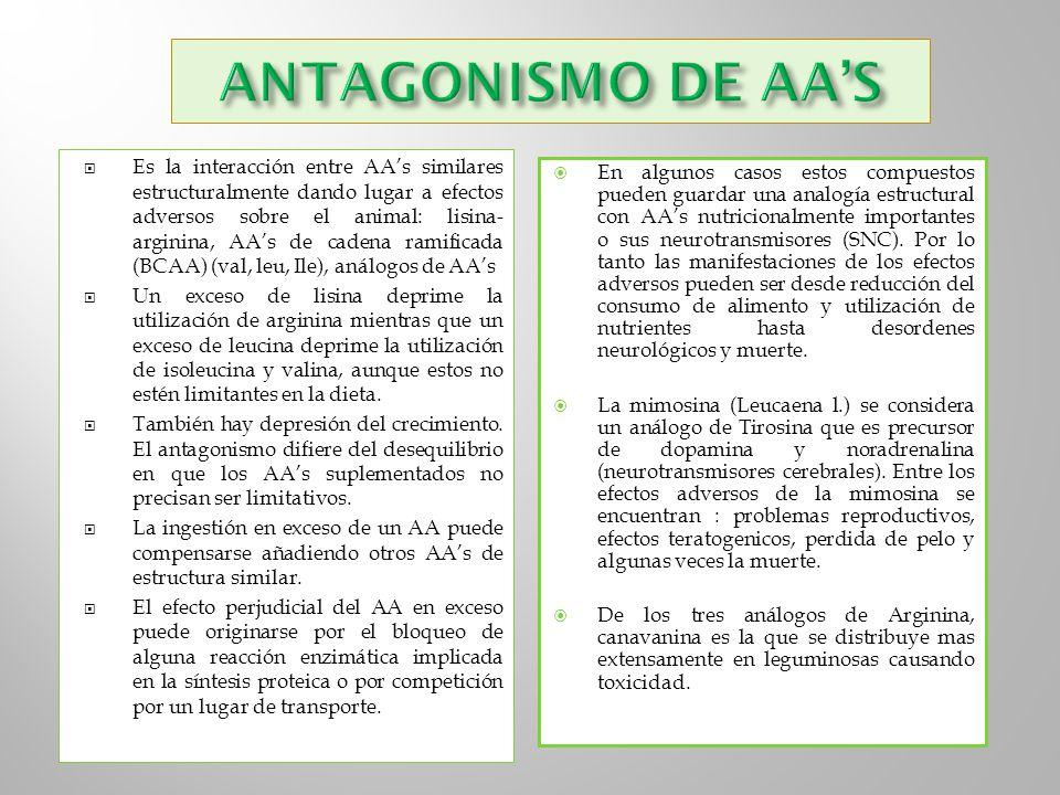 Es la interacción entre AAs similares estructuralmente dando lugar a efectos adversos sobre el animal: lisina- arginina, AAs de cadena ramificada (BCA
