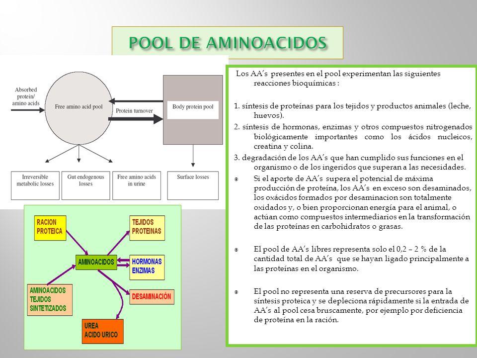 Los AAs presentes en el pool experimentan las siguientes reacciones bioquímicas : 1. síntesis de proteínas para los tejidos y productos animales (lech