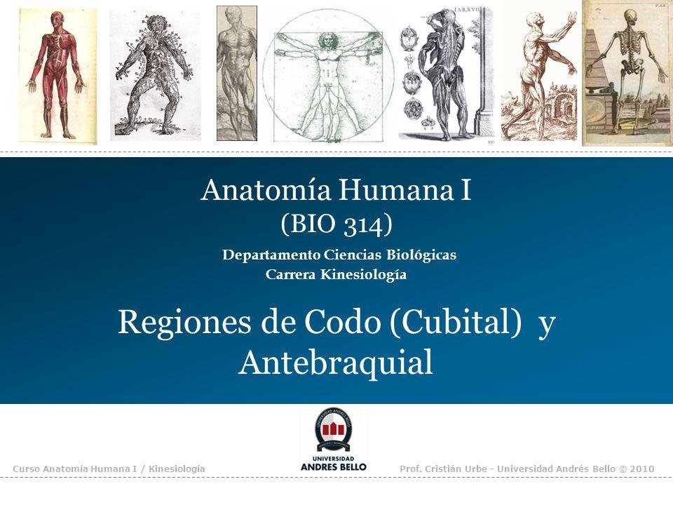 Curso Anatomía Humana I / KinesiologíaProf. Cristián Urbe - Universidad Andrés Bello © 2010 Anatomía Humana I (BIO 314) Departamento Ciencias Biológic