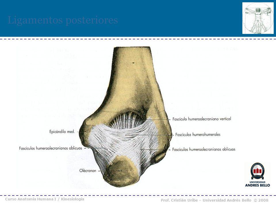 Curso Anatomía Humana I / Kinesiología Prof. Cristián Uribe – Universidad Andrés Bello © 2008 Ligamentos posteriores