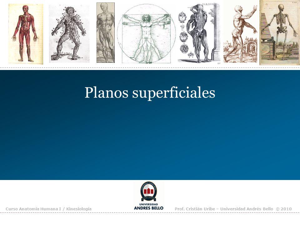 Planos superficiales Curso Anatomía Humana I / KinesiologíaProf. Cristián Uribe – Universidad Andrés Bello © 2010
