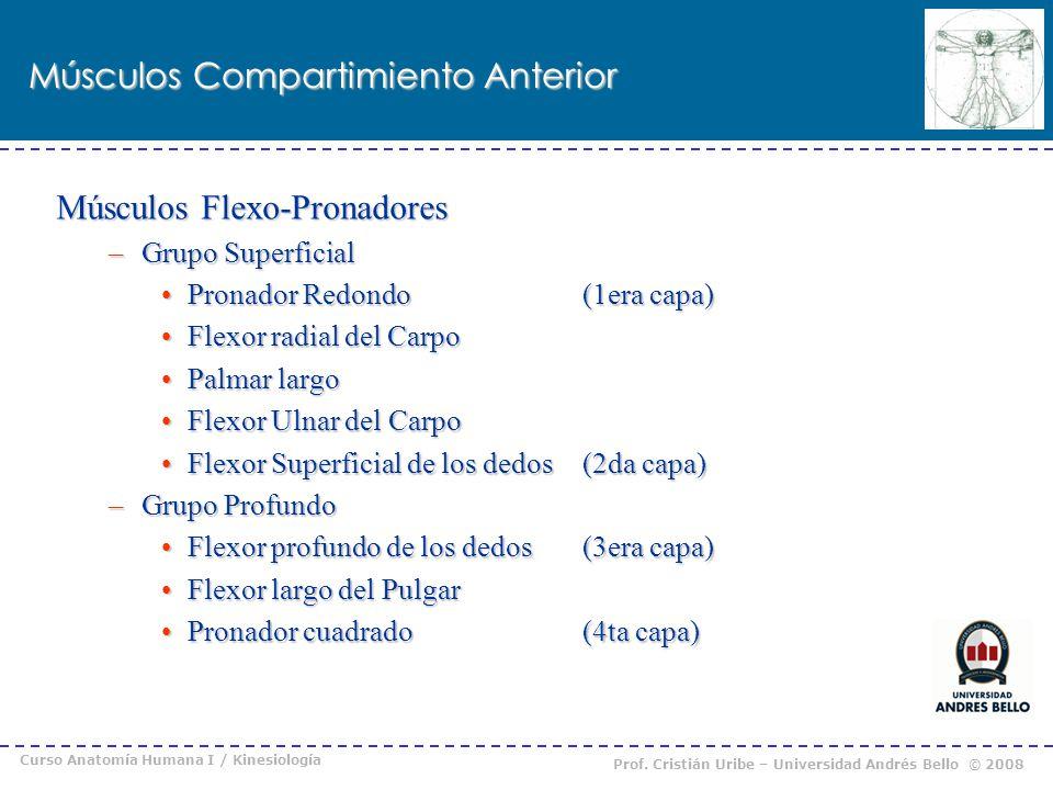 Curso Anatomía Humana I / Kinesiología Prof. Cristián Uribe – Universidad Andrés Bello © 2008 Músculos Compartimiento Anterior Músculos Flexo-Pronador