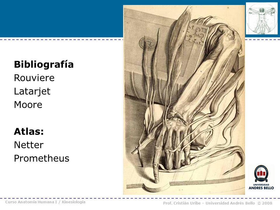 Curso Anatomía Humana I / Kinesiología Prof. Cristián Uribe – Universidad Andrés Bello © 2008 Bibliografía Rouviere Latarjet Moore Atlas: Netter Prome