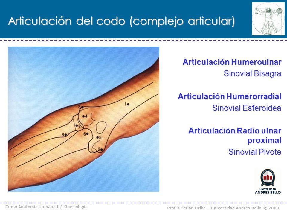 Curso Anatomía Humana I / Kinesiología Prof. Cristián Uribe – Universidad Andrés Bello © 2008 Articulación del codo (complejo articular) Articulación