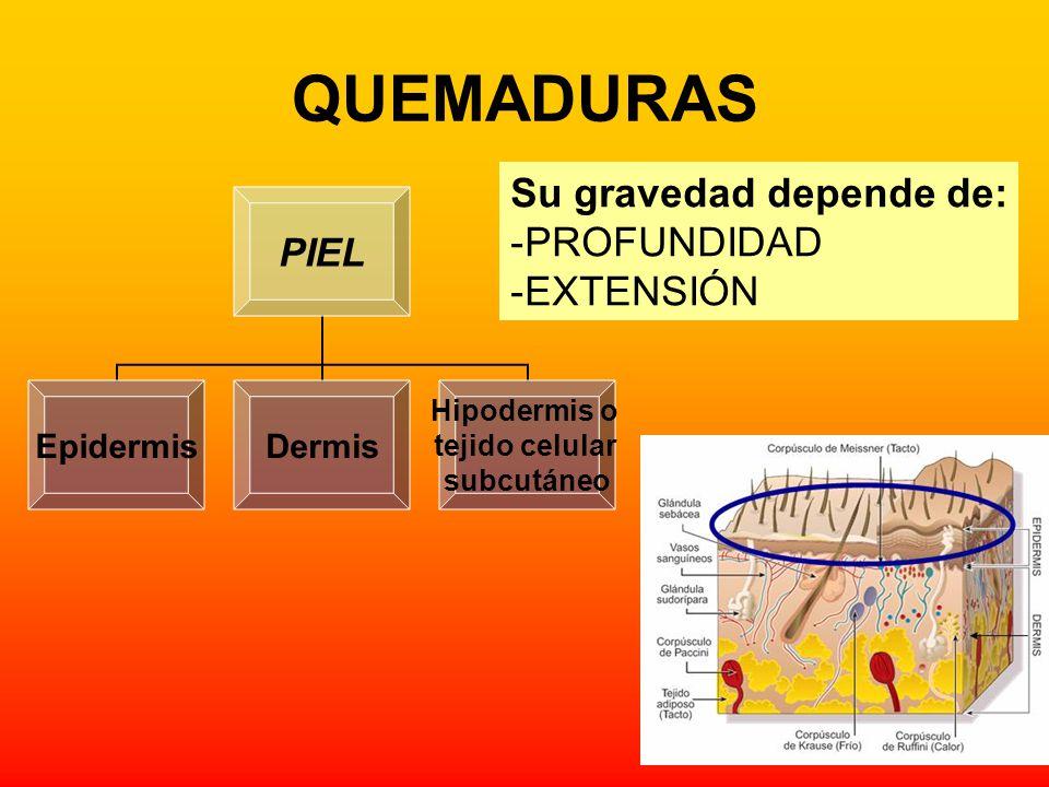 QUEMADURAS PIEL EpidermisDermis Hipodermis o tejido celular subcutáneo Su gravedad depende de: -PROFUNDIDAD -EXTENSIÓN