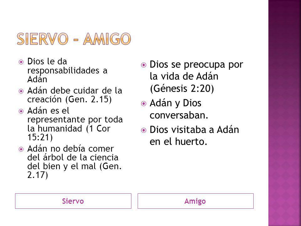 SiervoAmigo Dios le da responsabilidades a Adán Adán debe cuidar de la creación (Gen. 2.15) Adán es el representante por toda la humanidad (1 Cor 15:2