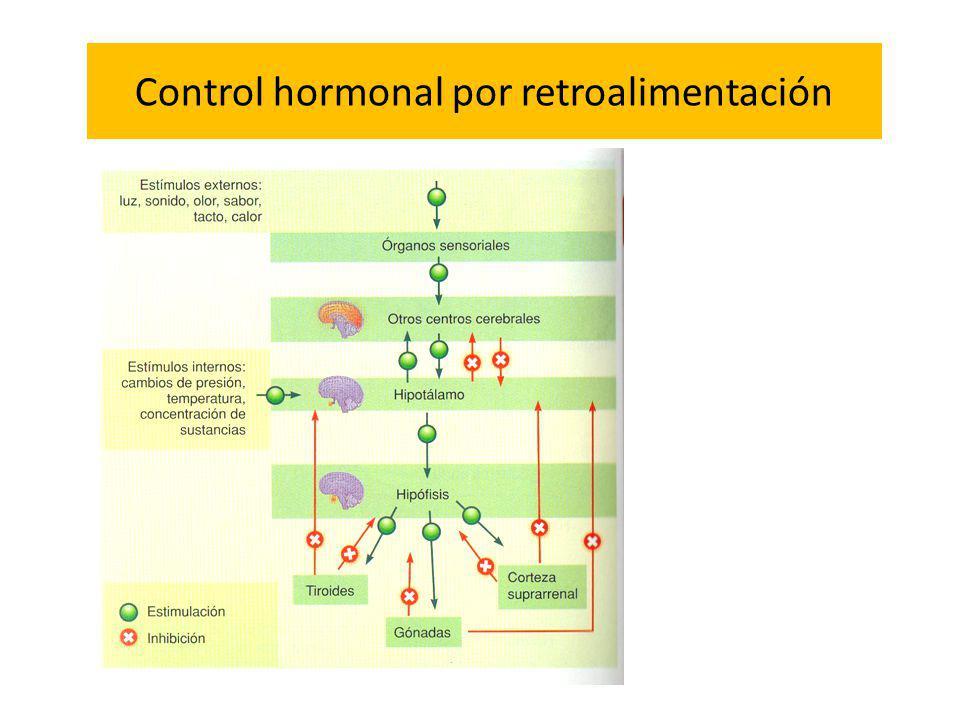 Control hormonal por retroalimentación