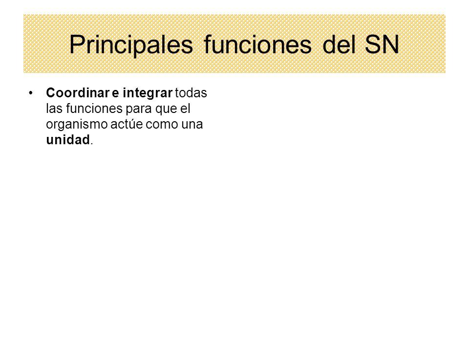 Principales funciones del SN Coordinar e integrar todas las funciones para que el organismo actúe como una unidad.