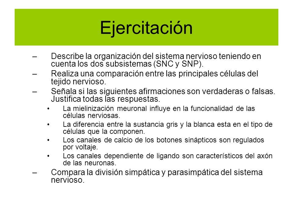 Ejercitación –Describe la organización del sistema nervioso teniendo en cuenta los dos subsistemas (SNC y SNP). –Realiza una comparación entre las pri