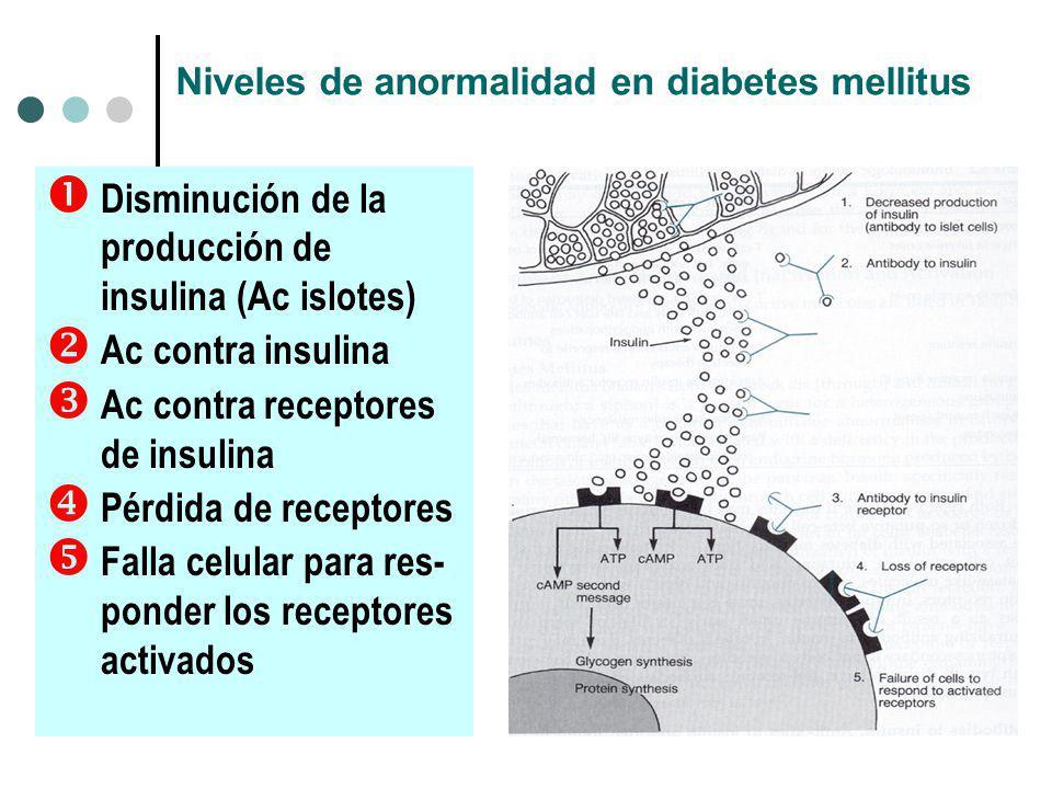 Niveles de anormalidad en diabetes mellitus Disminución de la producción de insulina (Ac islotes) Ac contra insulina Ac contra receptores de insulina Pérdida de receptores Falla celular para res- ponder los receptores activados