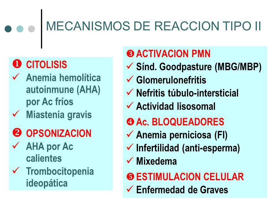 MECANISMOS DE REACCION TIPO II ACTIVACION PMN Sínd. Goodpasture (MBG/MBP) Glomerulonefritis Nefritis túbulo-intersticial Actividad lisosomal Ac. BLOQU