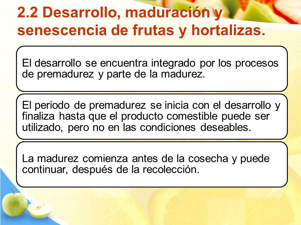 2.2 Desarrollo, maduración y senescencia de frutas y hortalizas. El desarrollo se encuentra integrado por los procesos de premadurez y parte de la mad