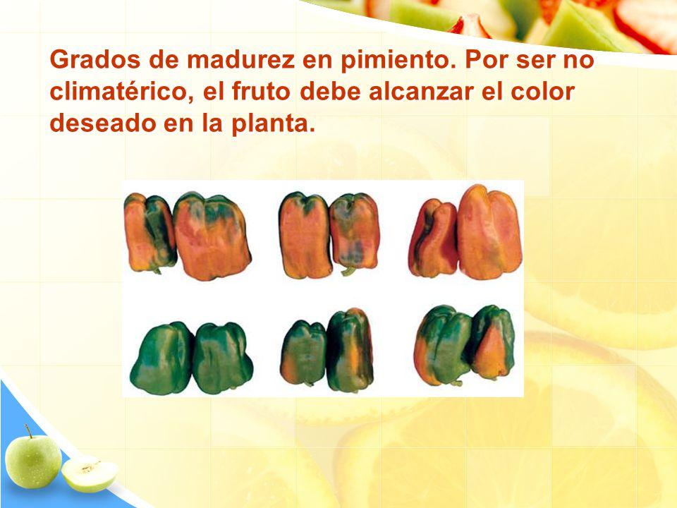 Grados de madurez en pimiento. Por ser no climatérico, el fruto debe alcanzar el color deseado en la planta.