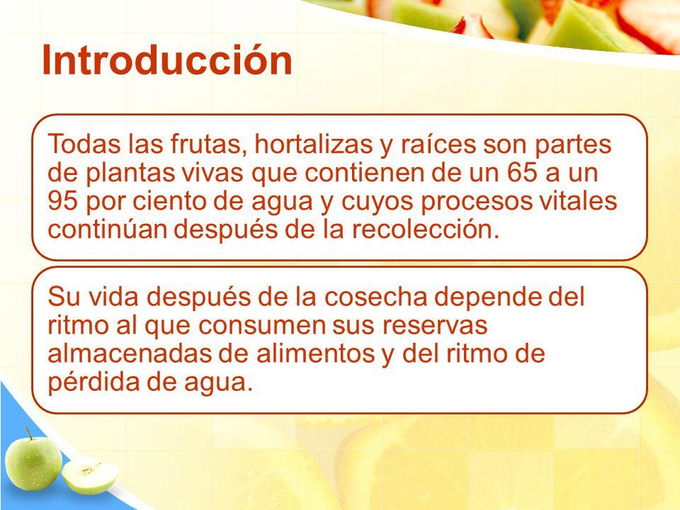 Introducción Todas las frutas, hortalizas y raíces son partes de plantas vivas que contienen de un 65 a un 95 por ciento de agua y cuyos procesos vita