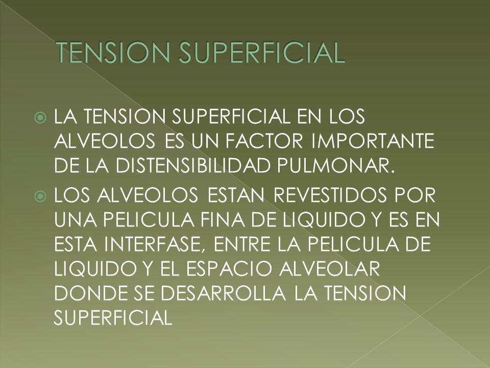 LA TENSION SUPERFICIAL EN LOS ALVEOLOS ES UN FACTOR IMPORTANTE DE LA DISTENSIBILIDAD PULMONAR. LOS ALVEOLOS ESTAN REVESTIDOS POR UNA PELICULA FINA DE