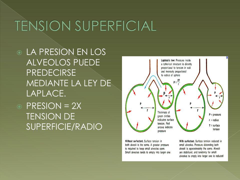 LA PRESION EN LOS ALVEOLOS PUEDE PREDECIRSE MEDIANTE LA LEY DE LAPLACE. PRESION = 2X TENSION DE SUPERFICIE/RADIO