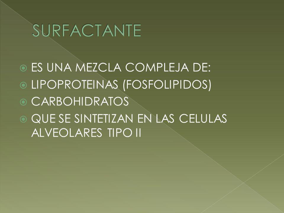 ES UNA MEZCLA COMPLEJA DE: LIPOPROTEINAS (FOSFOLIPIDOS) CARBOHIDRATOS QUE SE SINTETIZAN EN LAS CELULAS ALVEOLARES TIPO II