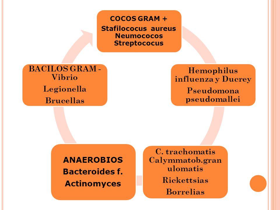 COCOS GRAM + Stafilococus aureus Neumococos Streptococus Hemophilus influenza y Ducrey Pseudomona pseudomallei C. trachomatis Calymmatob.gran ulomatis
