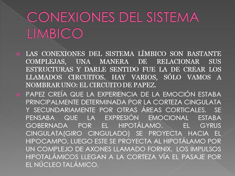 LAS CONEXIONES DEL SISTEMA LÍMBICO SON BASTANTE COMPLEJAS, UNA MANERA DE RELACIONAR SUS ESTRUCTURAS Y DARLE SENTIDO FUE LA DE CREAR LOS LLAMADOS CIRCUITOS.