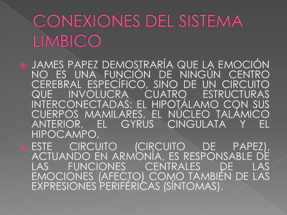 JAMES PAPEZ DEMOSTRARÍA QUE LA EMOCIÓN NO ES UNA FUNCIÓN DE NINGÚN CENTRO CEREBRAL ESPECÍFICO, SINO DE UN CIRCUITO QUE INVOLUCRA CUATRO ESTRUCTURAS INTERCONECTADAS: EL HIPOTÁLAMO CON SUS CUERPOS MAMILARES, EL NÚCLEO TALÁMICO ANTERIOR, EL GYRUS CINGULATA Y EL HIPOCAMPO.