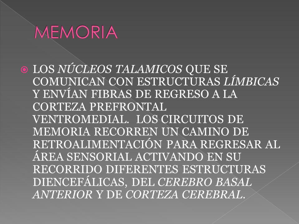 LOS NÚCLEOS TALAMICOS QUE SE COMUNICAN CON ESTRUCTURAS LÍMBICAS Y ENVÍAN FIBRAS DE REGRESO A LA CORTEZA PREFRONTAL VENTROMEDIAL. LOS CIRCUITOS DE MEMO