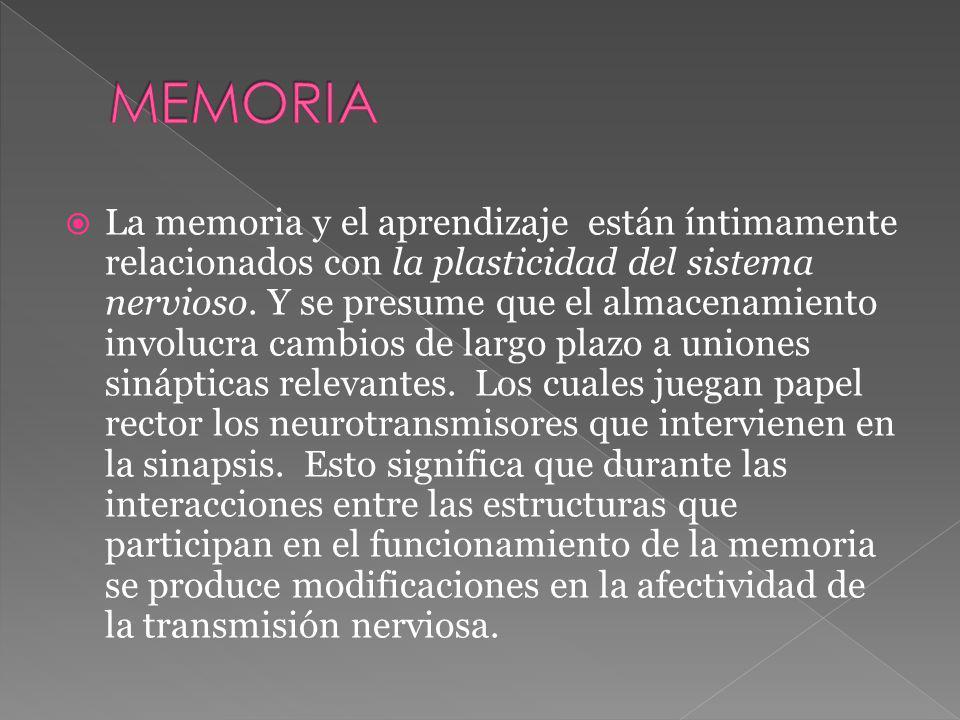 La memoria y el aprendizaje están íntimamente relacionados con la plasticidad del sistema nervioso. Y se presume que el almacenamiento involucra cambi