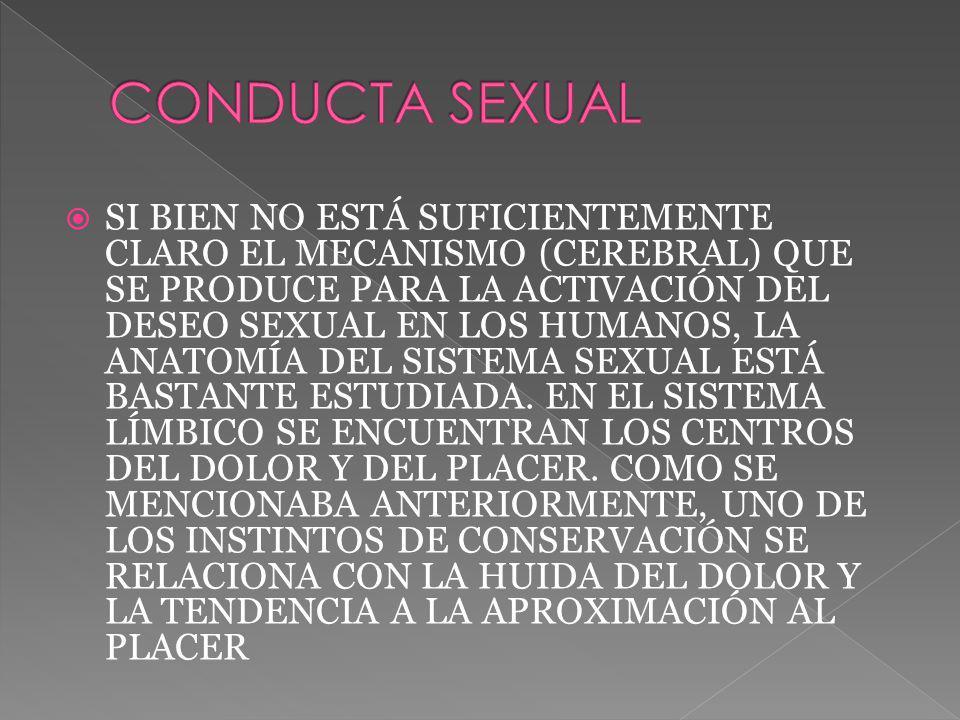 SI BIEN NO ESTÁ SUFICIENTEMENTE CLARO EL MECANISMO (CEREBRAL) QUE SE PRODUCE PARA LA ACTIVACIÓN DEL DESEO SEXUAL EN LOS HUMANOS, LA ANATOMÍA DEL SISTE
