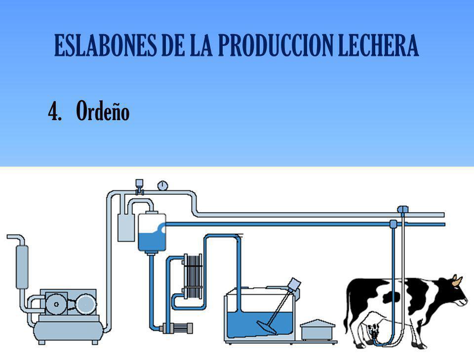 ESLABONES DE LA PRODUCCION LECHERA 4.Ordeño