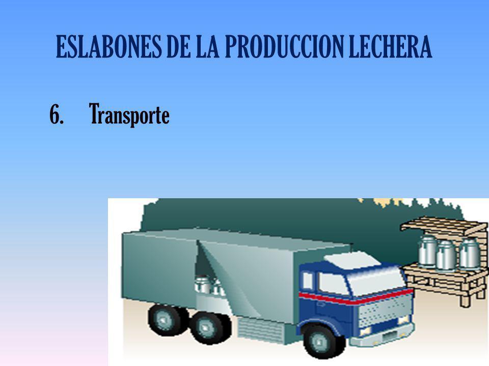 ESLABONES DE LA PRODUCCION LECHERA 6.Transporte
