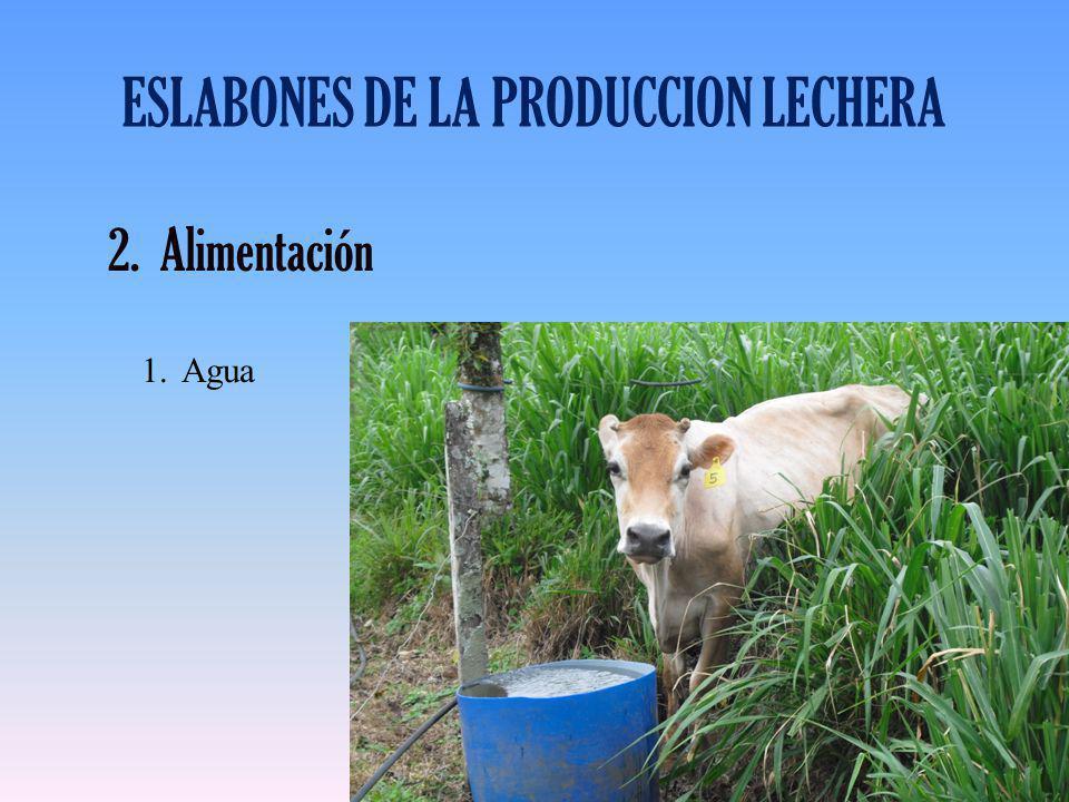 ESLABONES DE LA PRODUCCION LECHERA 2.Alimentación 1.Agua