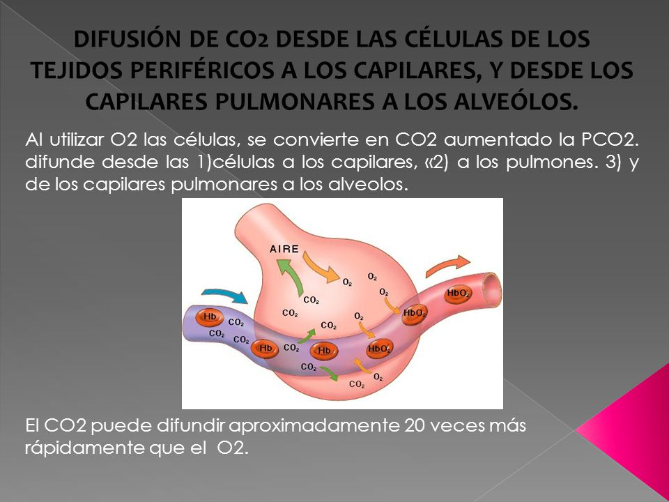 DIFUSIÓN DE CO2 DESDE LAS CÉLULAS DE LOS TEJIDOS PERIFÉRICOS A LOS CAPILARES, Y DESDE LOS CAPILARES PULMONARES A LOS ALVEÓLOS.