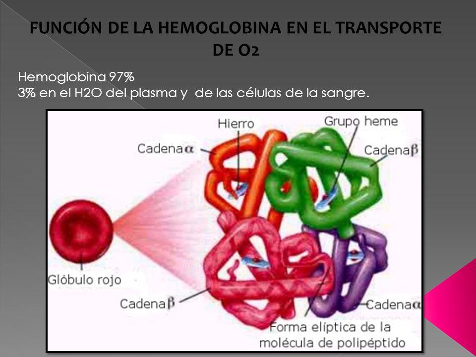 FUNCIÓN DE LA HEMOGLOBINA EN EL TRANSPORTE DE O2 Hemoglobina 97% 3% en el H2O del plasma y de las células de la sangre.