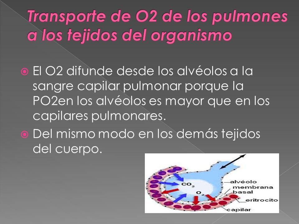 El O2 difunde desde los alvéolos a la sangre capilar pulmonar porque la PO2en los alvéolos es mayor que en los capilares pulmonares.