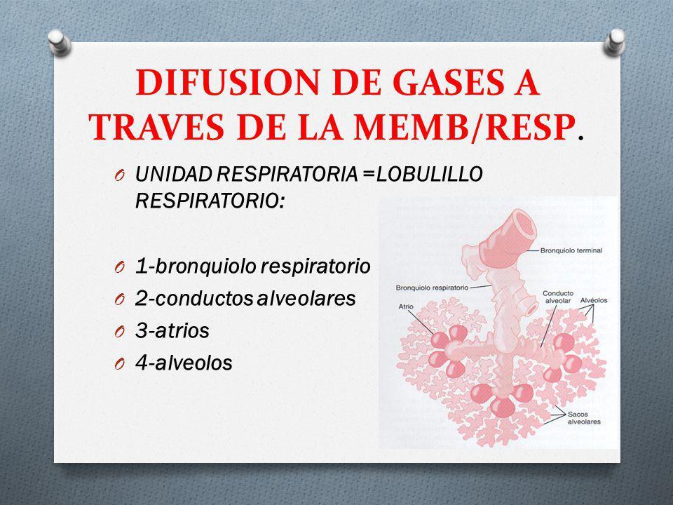 DIFUSION DE GASES A TRAVES DE LA MEMB/RESP. O UNIDAD RESPIRATORIA =LOBULILLO RESPIRATORIO: O 1-bronquiolo respiratorio O 2-conductos alveolares O 3-at