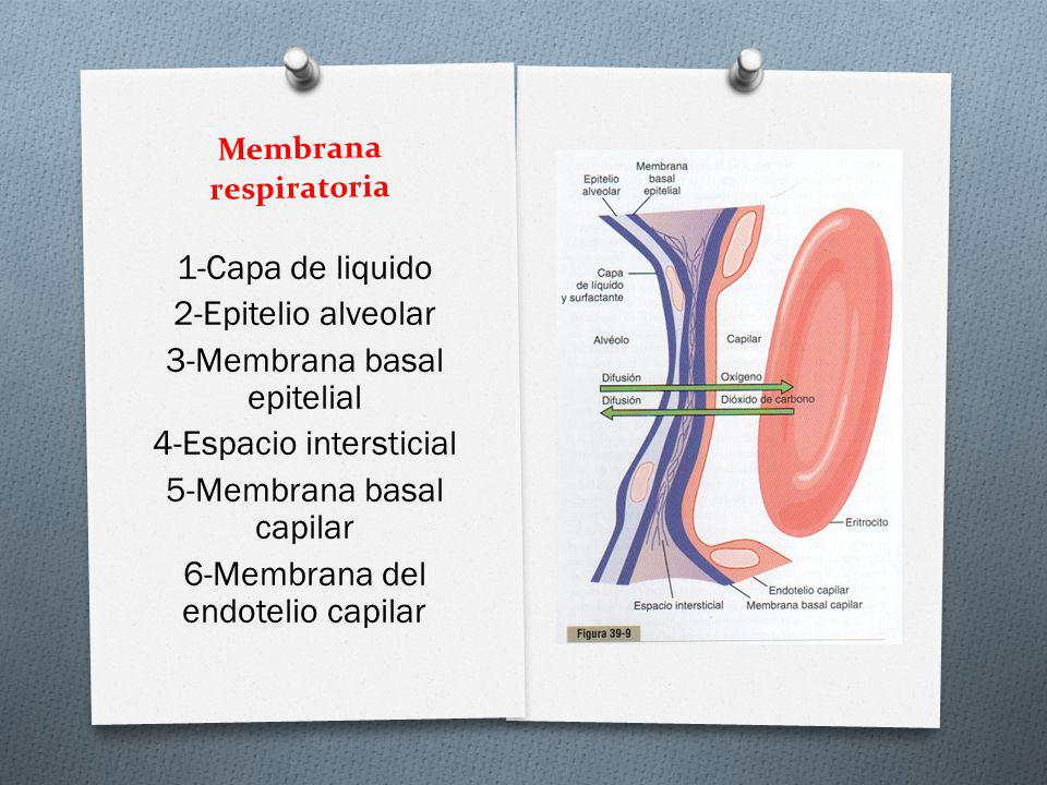 Membrana respiratoria 1-Capa de liquido 2-Epitelio alveolar 3-Membrana basal epitelial 4-Espacio intersticial 5-Membrana basal capilar 6-Membrana del