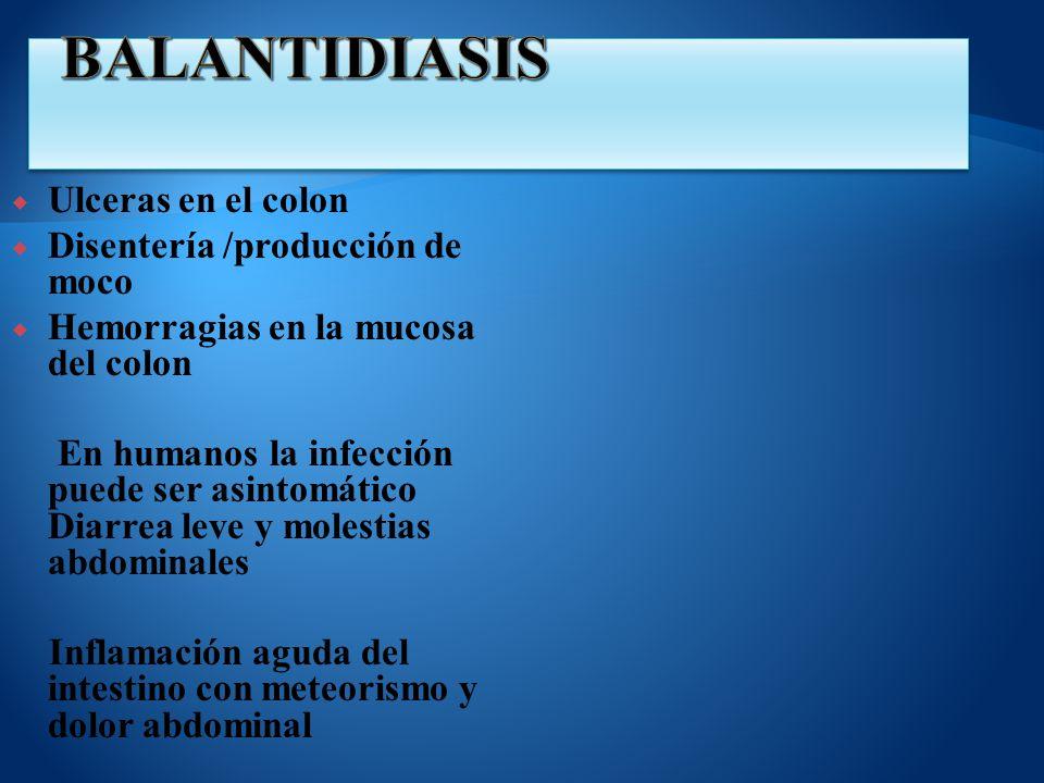Ulceras en el colon Disentería /producción de moco Hemorragias en la mucosa del colon En humanos la infección puede ser asintomático Diarrea leve y mo