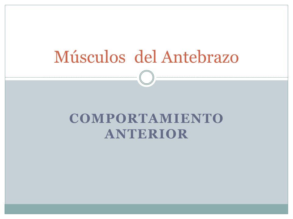 COMPORTAMIENTO ANTERIOR Músculos del Antebrazo