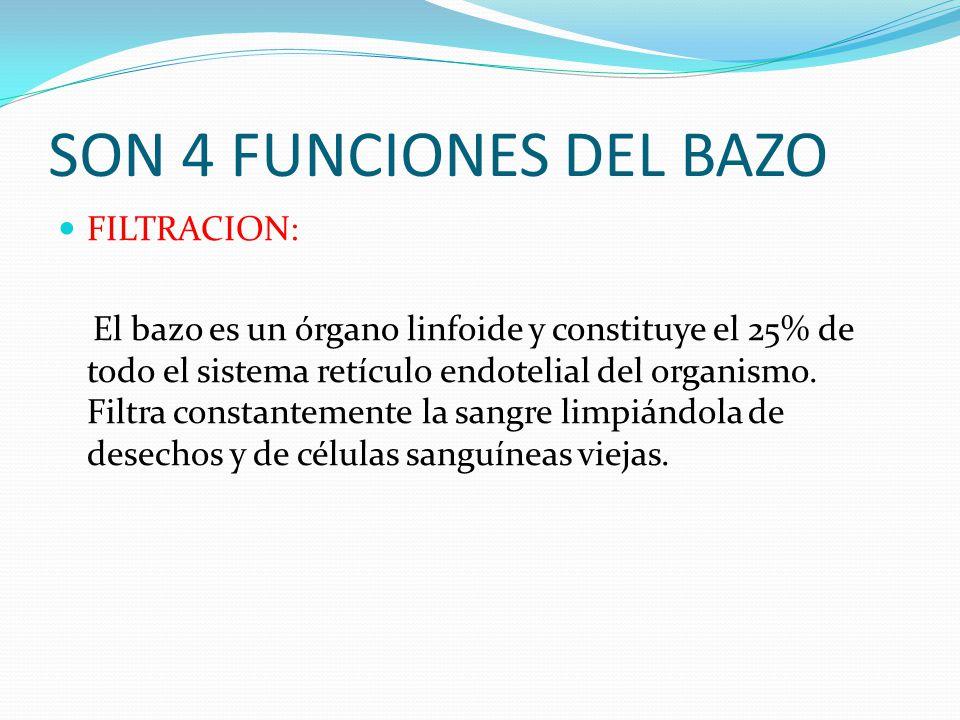 FUNCIONES INMUNOLOGICA: Produce inmunoglobulina M contra antígenos bacterianos y es la única fuente de producción de la Tufsina que es una inmunoglobulina esencial en la fagocitosis de neutrófilos.