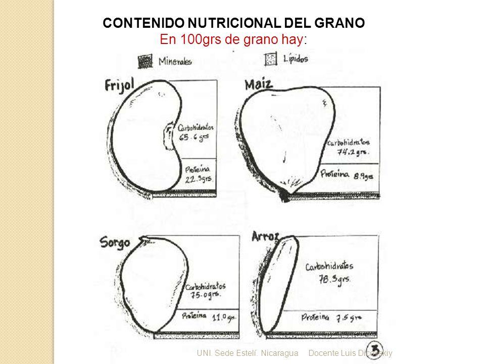 CONTENIDO NUTRICIONAL DEL GRANO En 100grs de grano hay: UNI. Sede Estelí. NicaraguaDocente Luis Dicovskiy