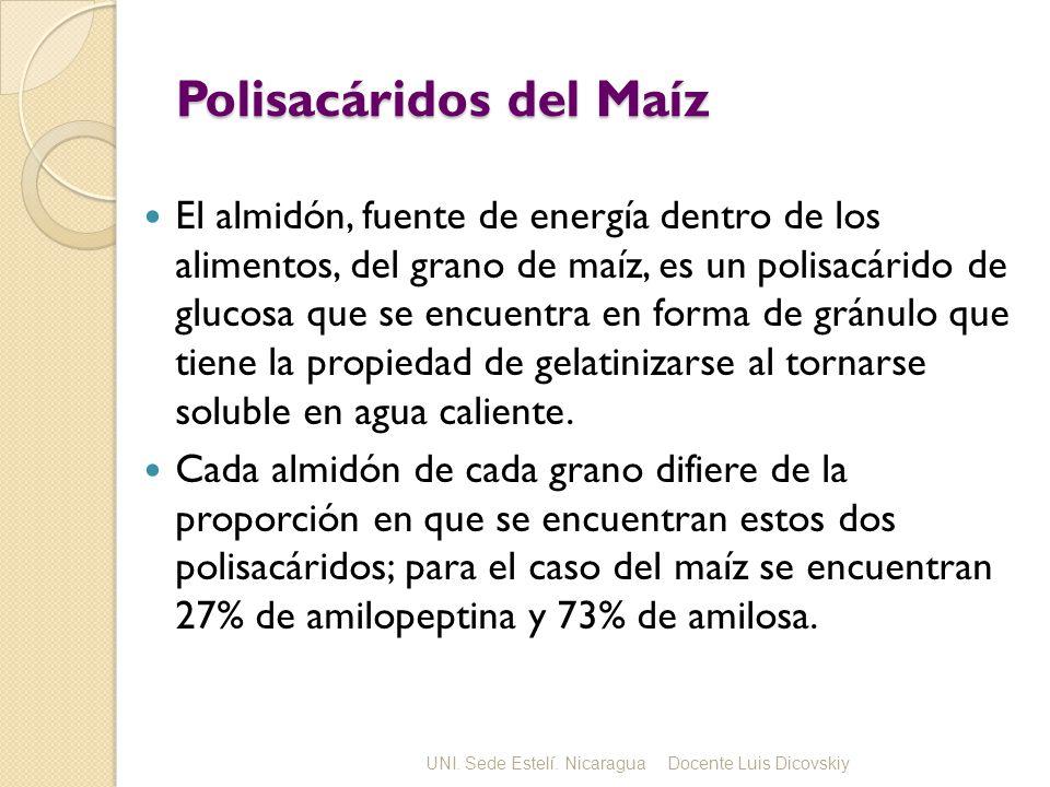 Polisacáridos del Maíz El almidón, fuente de energía dentro de los alimentos, del grano de maíz, es un polisacárido de glucosa que se encuentra en forma de gránulo que tiene la propiedad de gelatinizarse al tornarse soluble en agua caliente.