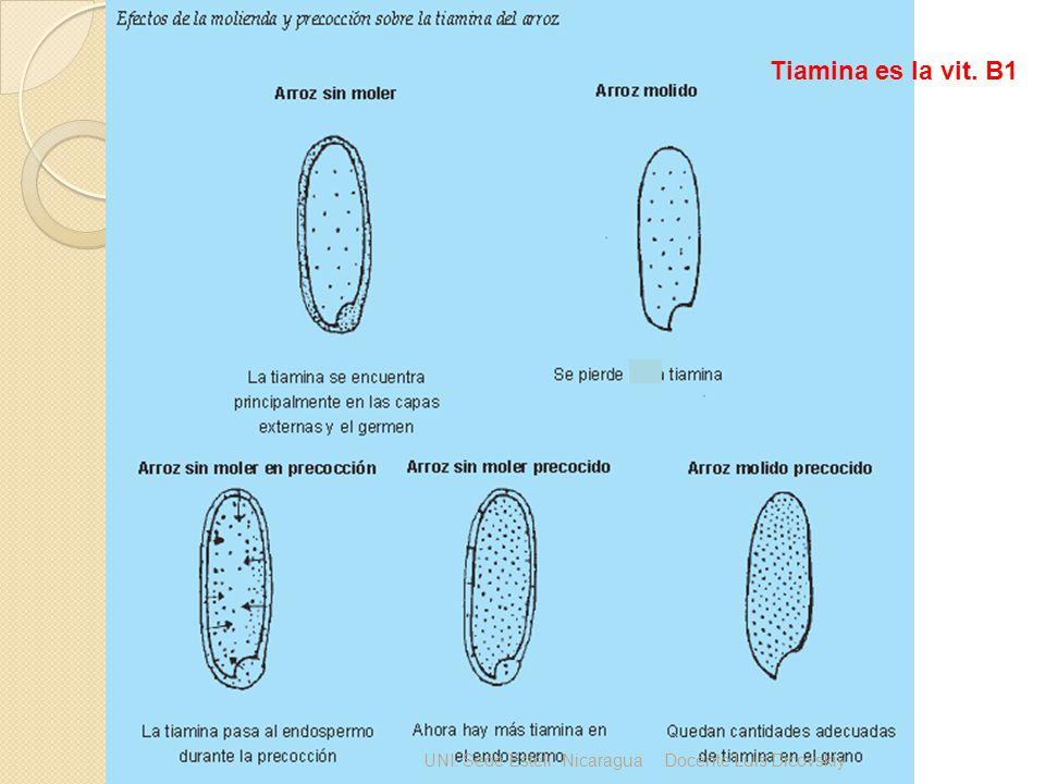 UNI. Sede Estelí. NicaraguaDocente Luis Dicovskiy Tiamina es la vit. B1
