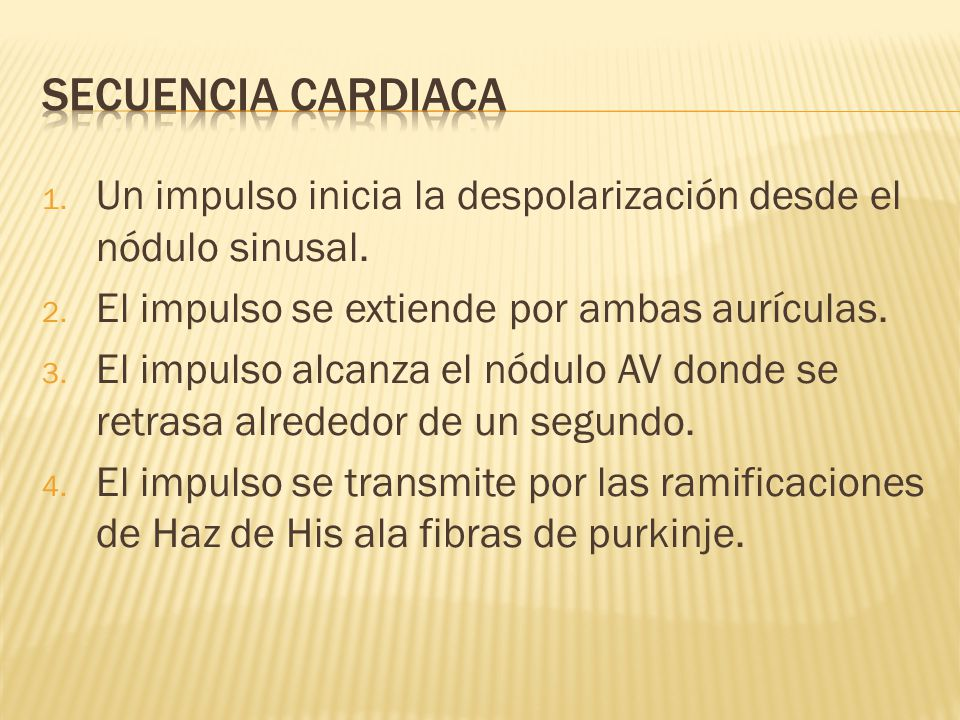 Tractos internodales Nódulo auriculoventricular Haz de bachman Tabique auriculoventricular Fibras de purkinje Nódulo sinusal Haz de his